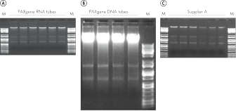 Figure 3. Recover high quality nucleic acids from frozen blood samples.